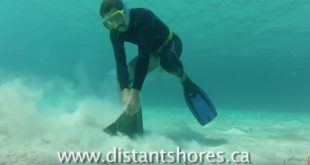 Rocna Anchor testing and setting underwater. VIDEO