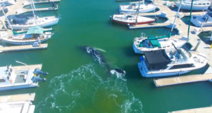 Humpback whale stuck in Ventura Harbor makes it back to open water